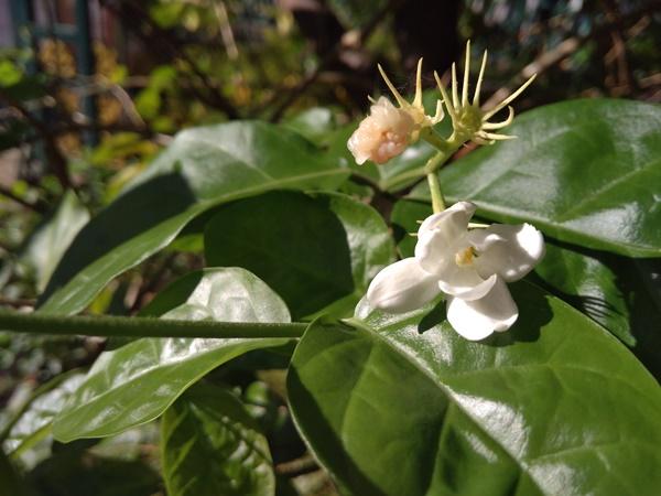 Redmi 4A Memotret Bunga